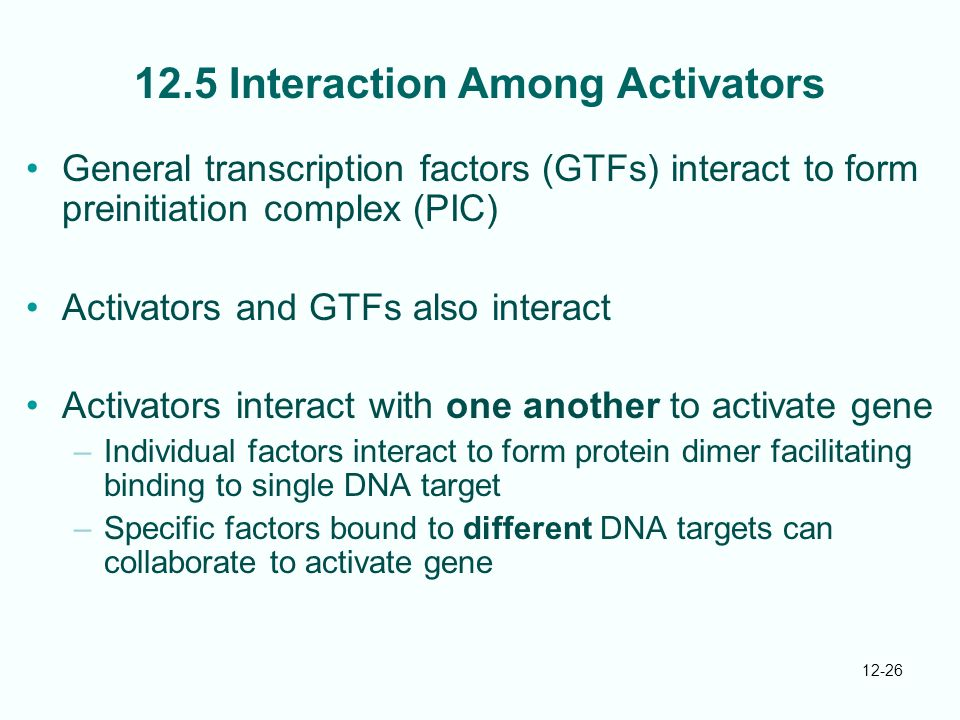 12-26 12.5 Interaction Among Activators General transcription factors (GTFs) interact to form preinitiation complex (PIC) Activators and GTFs also interact Activators interact with one another to activate gene –Individual factors interact to form protein dimer facilitating binding to single DNA target –Specific factors bound to different DNA targets can collaborate to activate gene