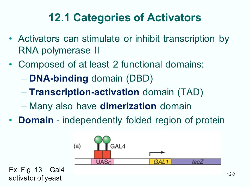 12-3 12.1 Categories of Activators Activators can stimulate or inhibit transcription by RNA polymerase II Composed of at least 2 functional domains: –DNA-binding domain (DBD) –Transcription-activation domain (TAD) –Many also have dimerization domain Domain - independently folded region of protein Ex.