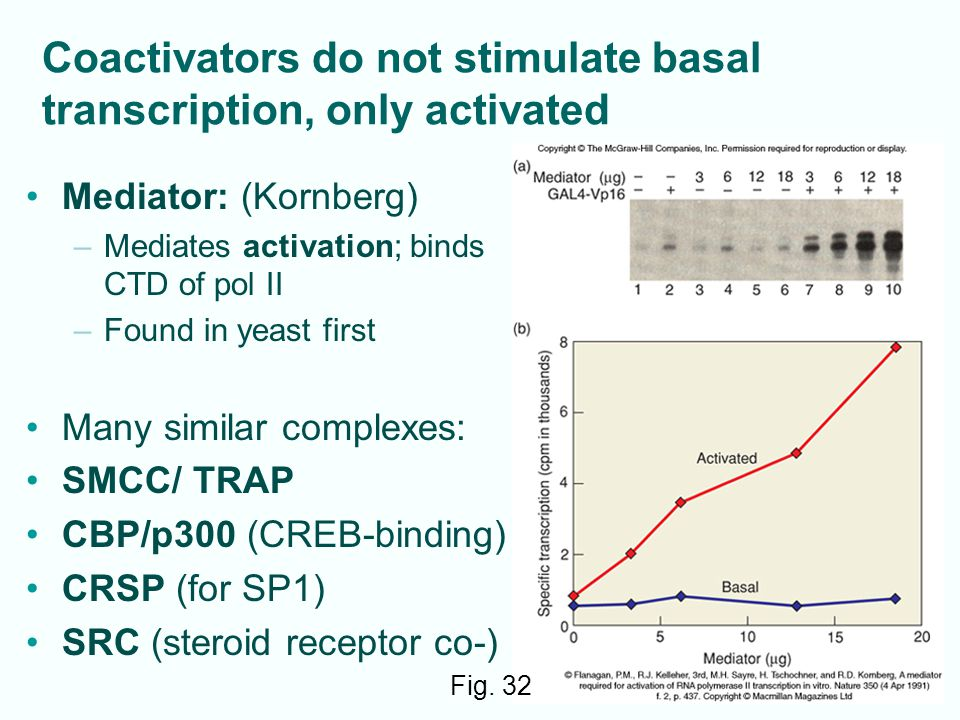Coactivators do not stimulate basal transcription, only activated 12-40 Mediator: (Kornberg) –Mediates activation; binds CTD of pol II –Found in yeast first Many similar complexes: SMCC/ TRAP CBP/p300 (CREB-binding) CRSP (for SP1) SRC (steroid receptor co-) Fig.