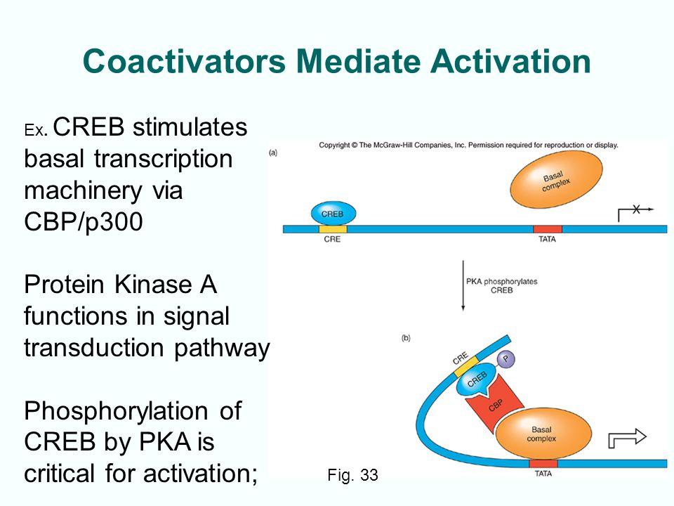 12-41 Coactivators Mediate Activation Fig.33 Ex.