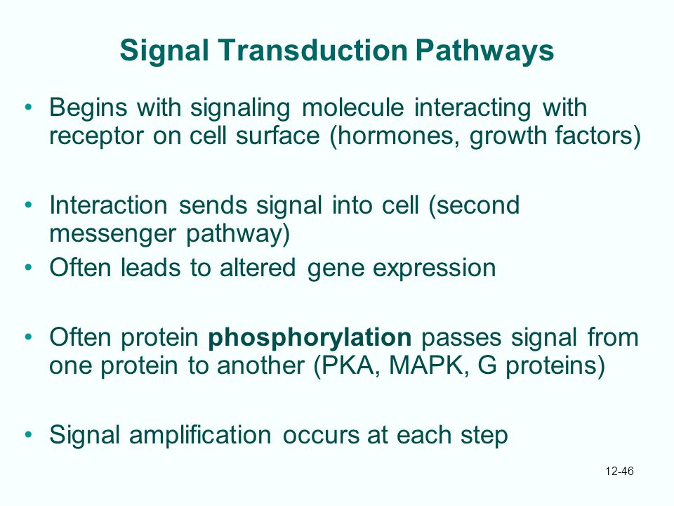 12-46 Signal Transduction Pathways Begins with signaling molecule interacting with receptor on cell surface (hormones, growth factors) Interaction sends signal into cell (second messenger pathway) Often leads to altered gene expression Often protein phosphorylation passes signal from one protein to another (PKA, MAPK, G proteins) Signal amplification occurs at each step