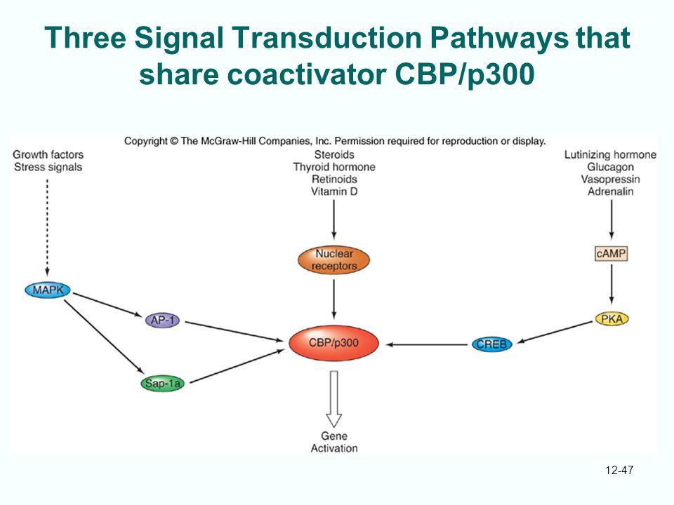 12-47 Three Signal Transduction Pathways that share coactivator CBP/p300
