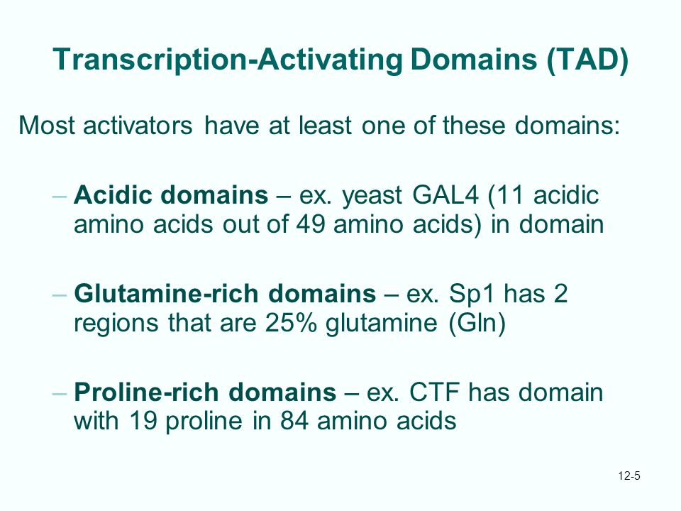 12-5 Transcription-Activating Domains (TAD) Most activators have at least one of these domains: –Acidic domains – ex.