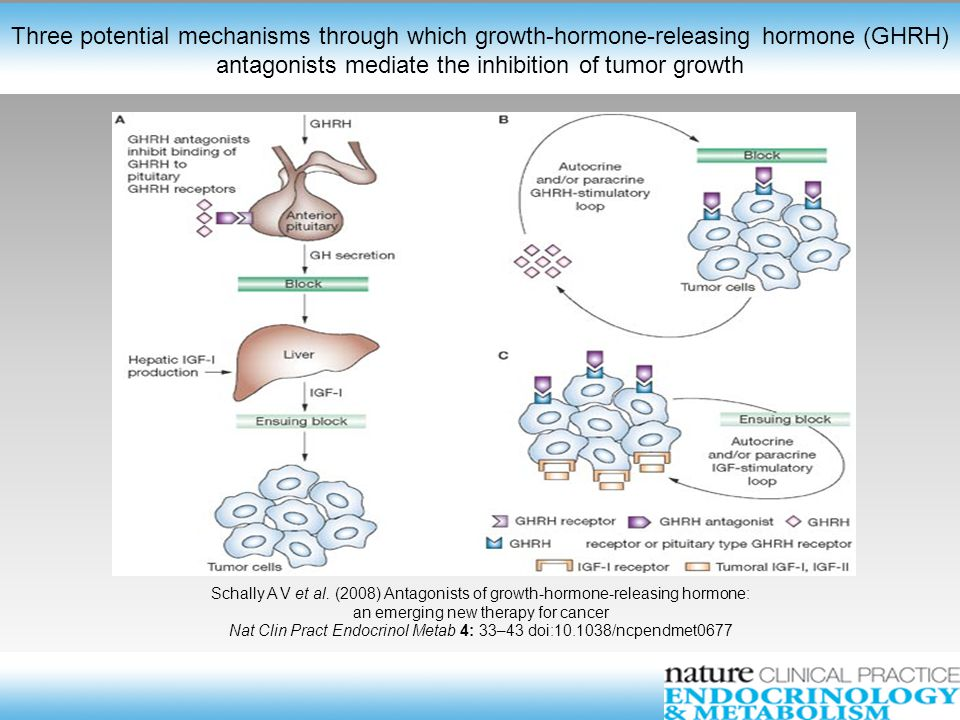 Schally A V et al. (2008) Antagonists of growth-hormone-releasing hormone: an emerging new therapy for cancer Nat Clin Pract Endocrinol Metab 4: 33–43
