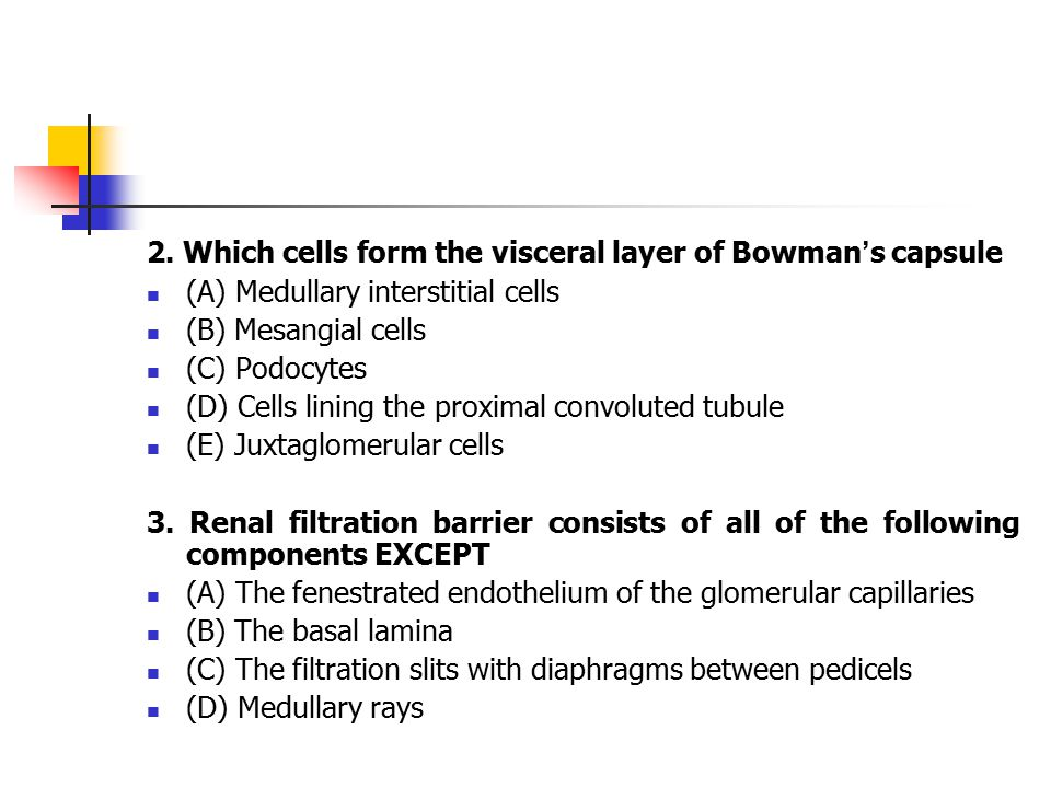 2. Which cells form the visceral layer of Bowman ' s capsule (A) Medullary interstitial cells (B) Mesangial cells (C) Podocytes (D) Cells lining the p