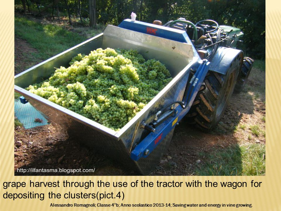 grape harvest through the use of the tractor with the wagon for depositing the clusters(pict.4) Alessandro Romagnoli; Classe 4°b; Anno scolastico 2013-14; Saving water and energy in vine growing.
