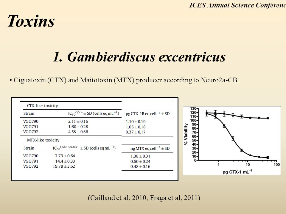ICES Annual Science Conference Toxins 1. Gambierdiscus excentricus Ciguatoxin (CTX) and Maitotoxin (MTX) producer according to Neuro2a-CB. (Caillaud e