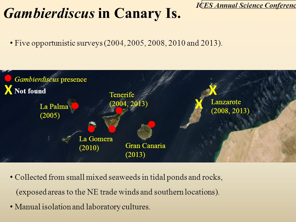 Gambierdiscus in Canary Is.Five opportunistic surveys (2004, 2005, 2008, 2010 and 2013).