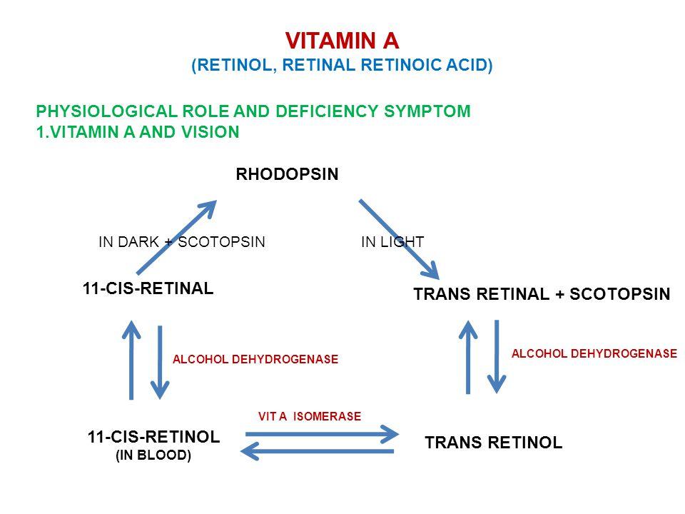 VITAMIN A (RETINOL, RETINAL RETINOIC ACID) PHYSIOLOGICAL ROLE AND DEFICIENCY SYMPTOM 1.VITAMIN A AND VISION 11-CIS-RETINOL (IN BLOOD) TRANS RETINOL 11-CIS-RETINAL TRANS RETINAL + SCOTOPSIN RHODOPSIN IN DARK + SCOTOPSININ LIGHT ALCOHOL DEHYDROGENASE VIT A ISOMERASE
