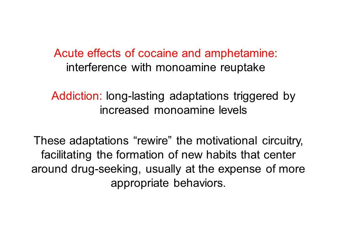 Link to dopamine.