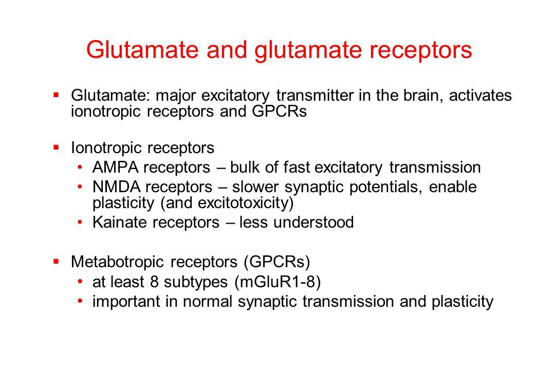 D1 receptor stimulation increases GluR1 surface expression in NAc neurons Control 1  M SKF Chao et al, J Neurochem 83:704-12, 2002