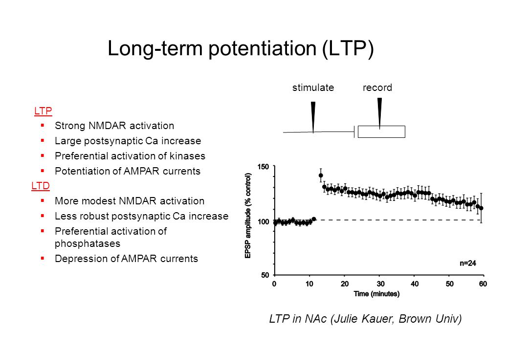 Functional significance of LTP in addiction-related pathways? Wolf, Molecular Interventions 2002