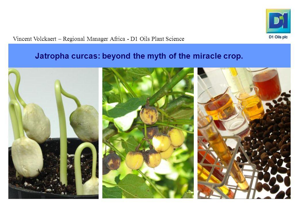 Jatropha curcas: beyond the myth of the miracle crop.