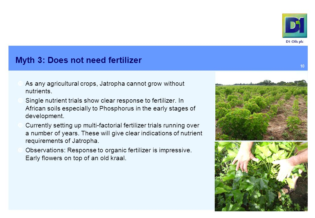 Myth 3: Does not need fertilizer  As any agricultural crops, Jatropha cannot grow without nutrients.