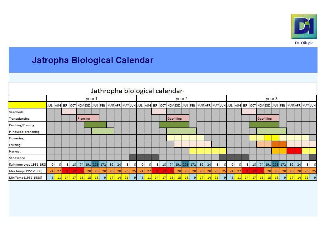 Jatropha Biological Calendar