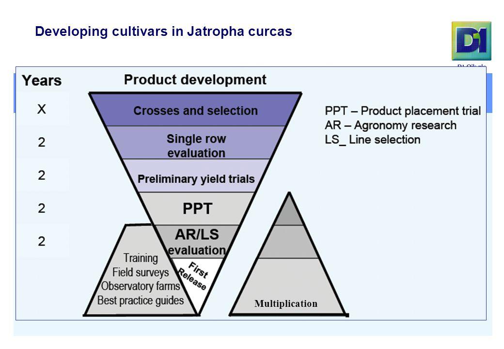 Multiplication Developing cultivars in Jatropha curcas