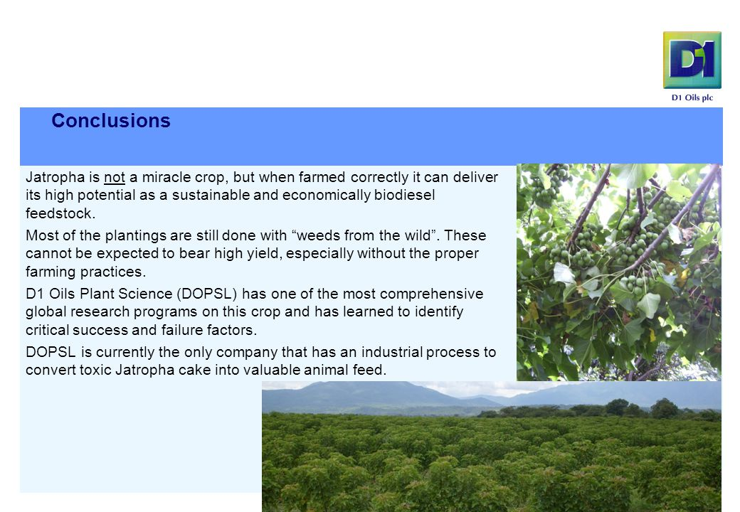 Conclusions  Jatropha is not a miracle crop, but when farmed correctly it can deliver its high potential as a sustainable and economically biodiesel feedstock.