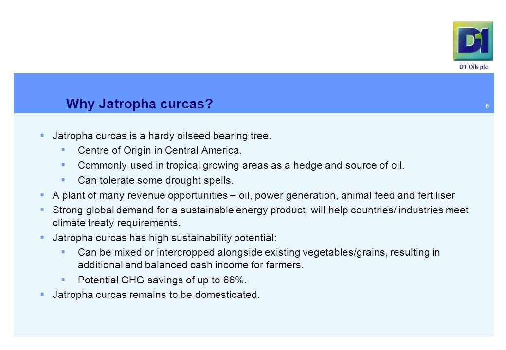 Why Jatropha curcas.  Jatropha curcas is a hardy oilseed bearing tree.