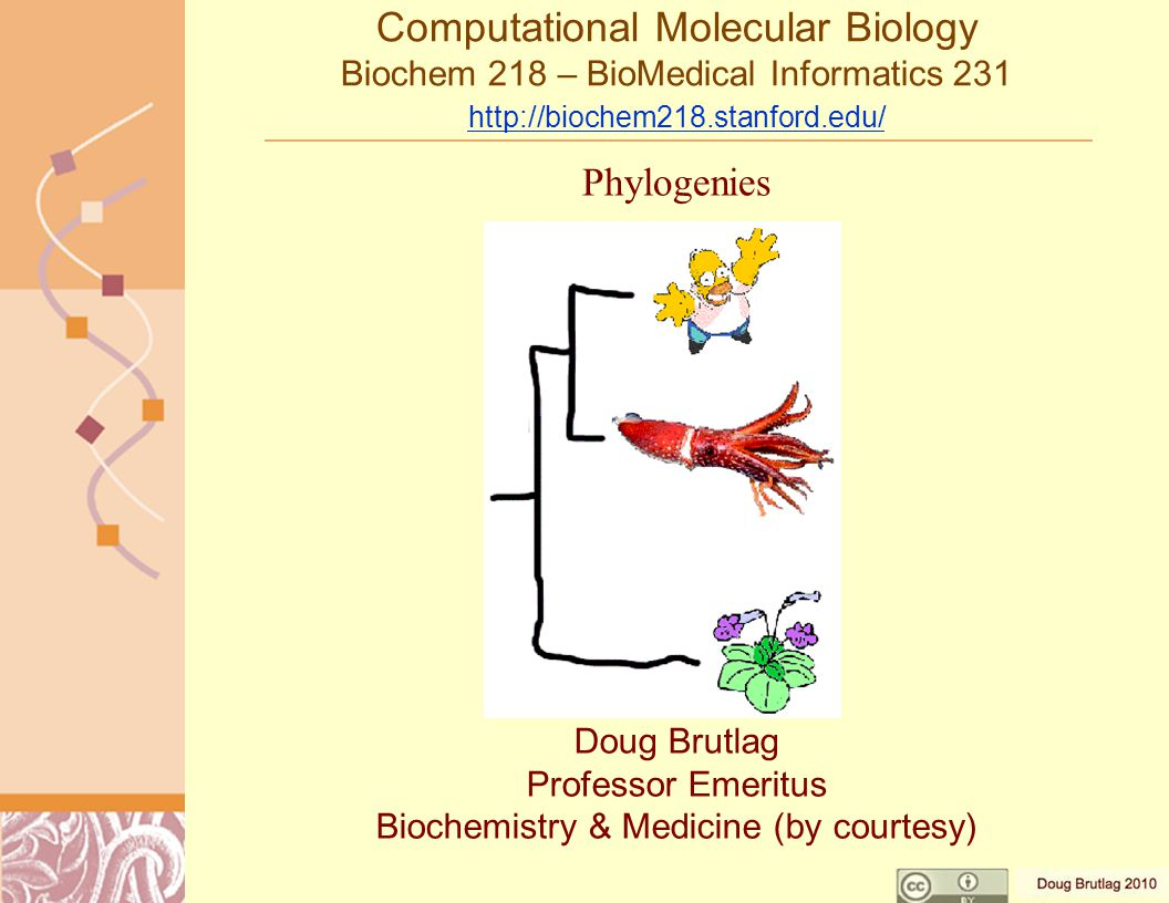 Computational Molecular Biology Biochem 218 – BioMedical Informatics 231 http://biochem218.stanford.edu/ http://biochem218.stanford.edu/ Doug Brutlag Professor Emeritus Biochemistry & Medicine (by courtesy) Phylogenies
