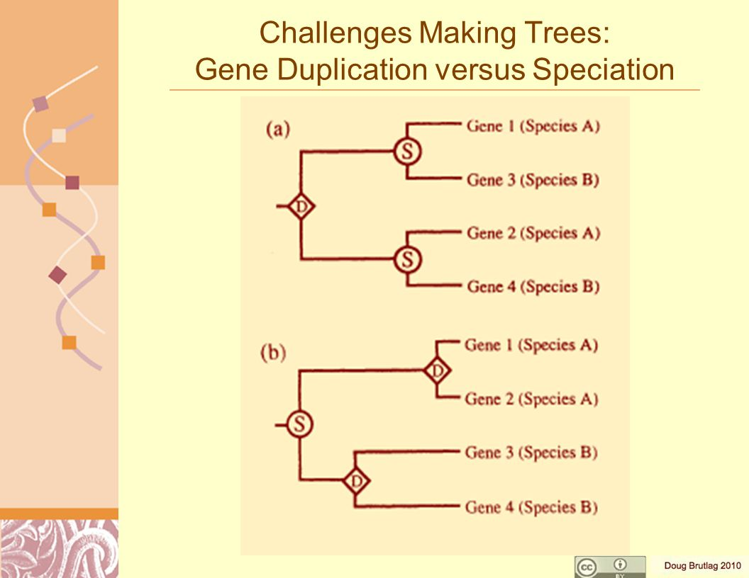 Challenges Making Trees: Gene Duplication versus Speciation
