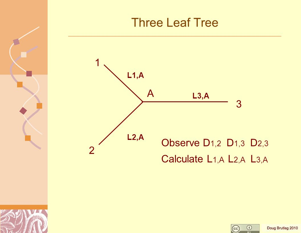 Three Leaf Tree Observe D 1,2 D 1,3 D 2,3 Calculate L 1,A L 2,A L 3,A 1 2 3 A L1,A L2,A L3,A