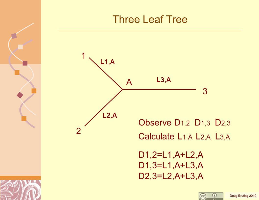 Three Leaf Tree Observe D 1,2 D 1,3 D 2,3 Calculate L 1,A L 2,A L 3,A D1,2=L1,A+L2,A D1,3=L1,A+L3,A D2,3=L2,A+L3,A 1 2 3 A L1,A L2,A L3,A