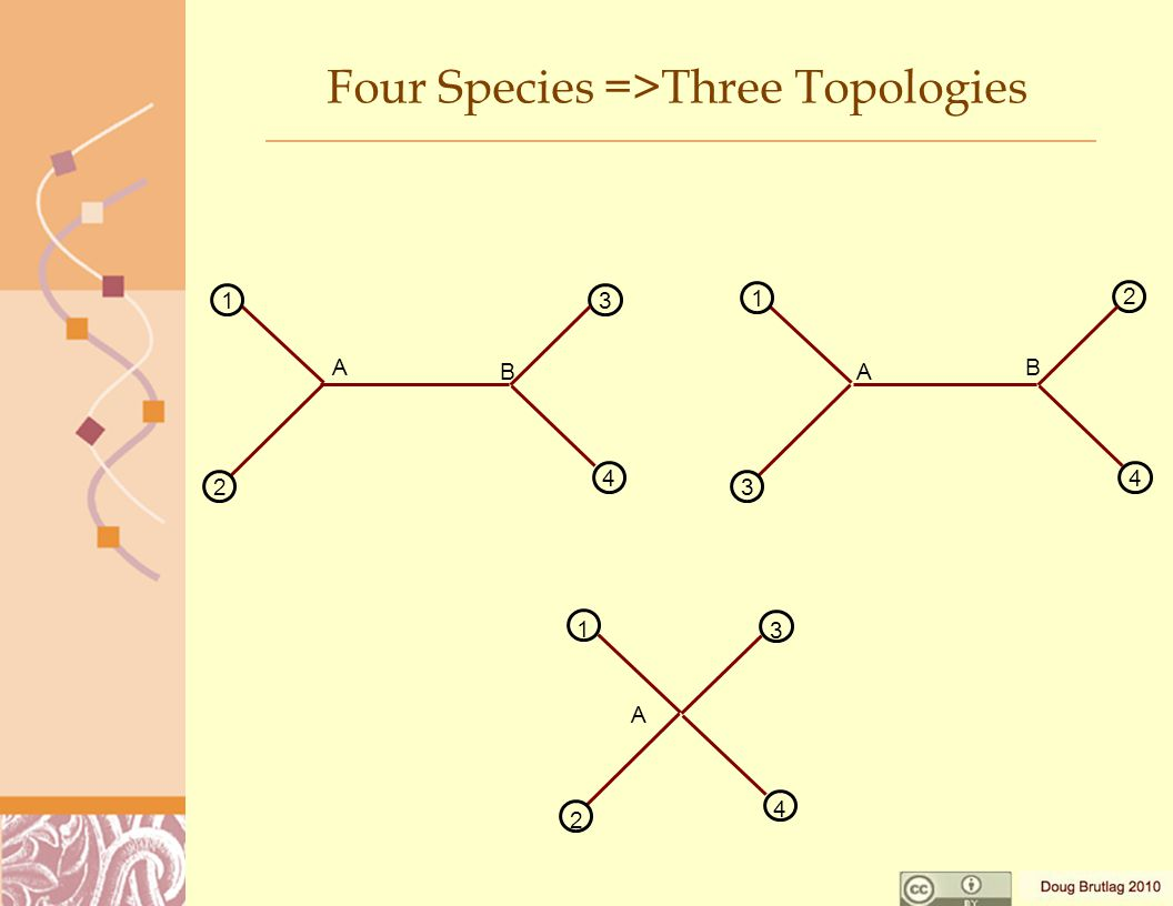 Four Species =>Three Topologies 1 2 3 A 4 B 1 3 2 A 4 B 1 2 A 3 4