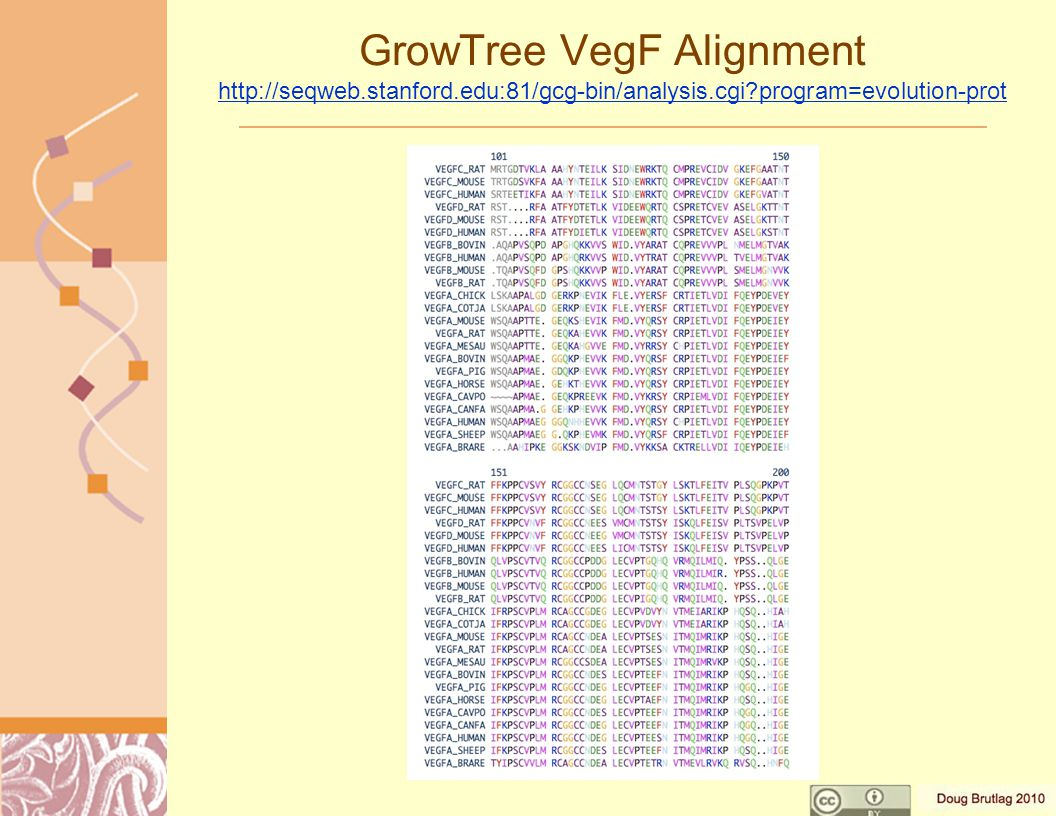 GrowTree VegF Alignment http://seqweb.stanford.edu:81/gcg-bin/analysis.cgi program=evolution-prot http://seqweb.stanford.edu:81/gcg-bin/analysis.cgi program=evolution-prot