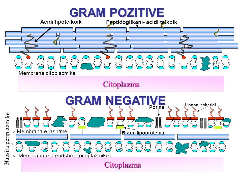 GRAM POZITIVE GRAM NEGATIVE Citoplazma Citoplazma Acidi lipoteikoik Peptidoglikani- acidi teikoik Membrana citoplazmike Membrana e brendshme(citoplazmike) Membrana e jashtme Lipopolisaharidi Porina Braun lipoproteina Hapsira periplazmike