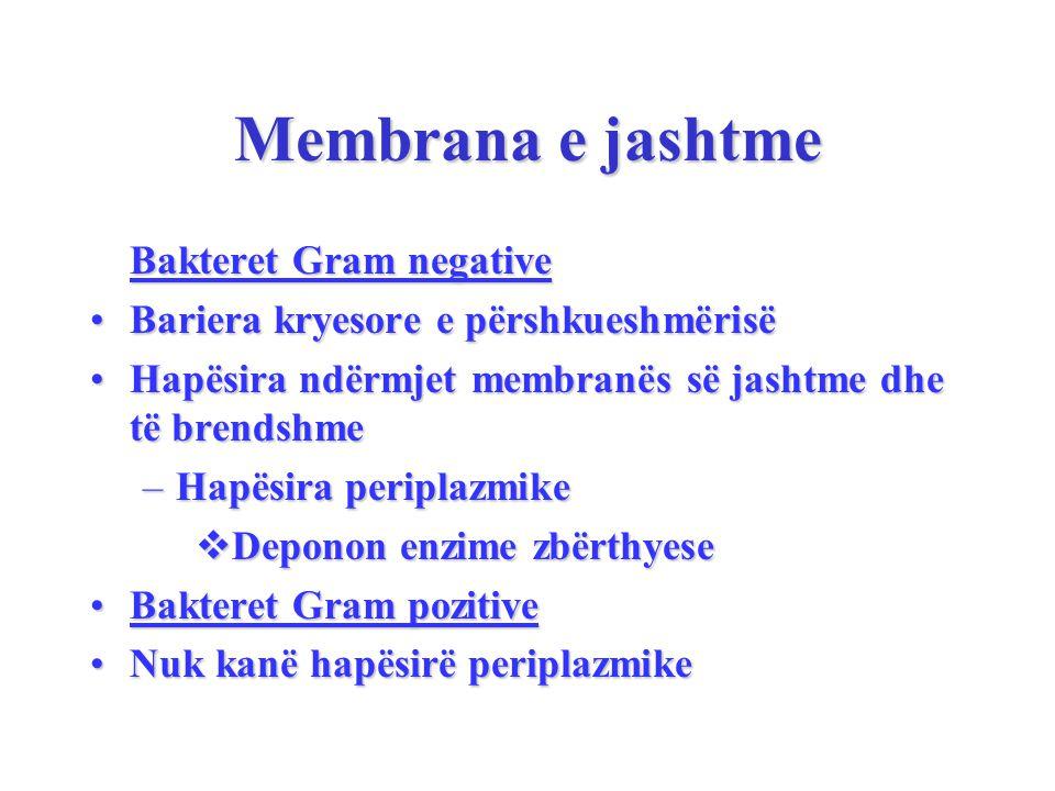 Membrana e jashtme Bakteret Gram negative Bakteret Gram negative Bariera kryesore e përshkueshmërisëBariera kryesore e përshkueshmërisë Hapësira ndërmjet membranës së jashtme dhe të brendshmeHapësira ndërmjet membranës së jashtme dhe të brendshme –Hapësira periplazmike  Deponon enzime zbërthyese Bakteret Gram pozitiveBakteret Gram pozitive Nuk kanë hapësirë periplazmikeNuk kanë hapësirë periplazmike