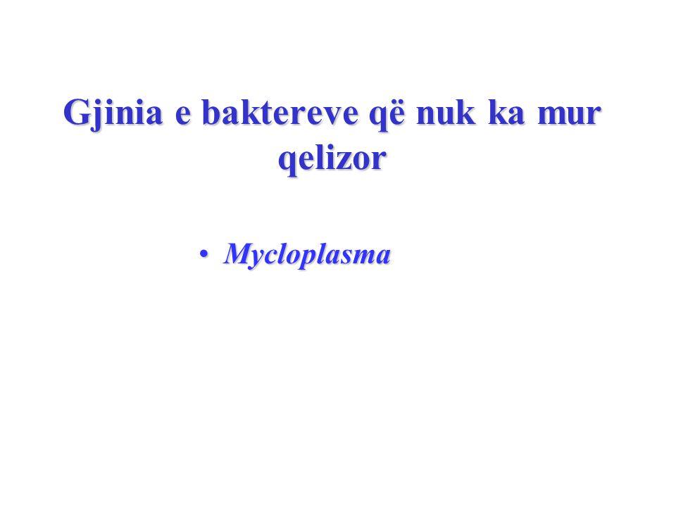 Gjinia e baktereve që nuk ka mur qelizor MycloplasmaMycloplasma