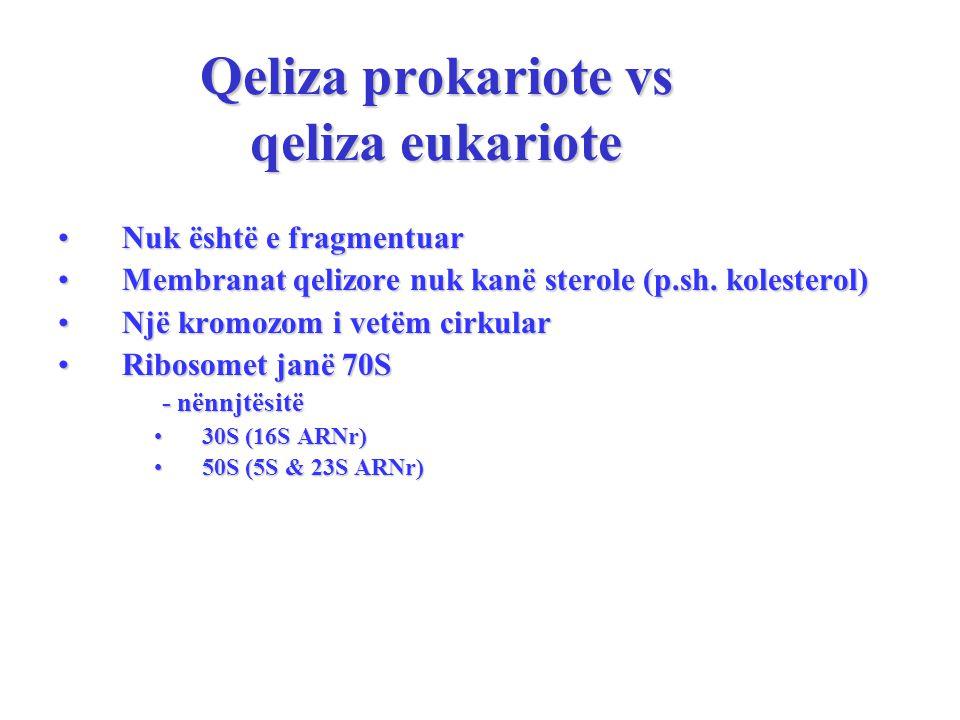 Qeliza prokariote vs qeliza eukariote Nuk është e fragmentuarNuk është e fragmentuar Membranat qelizore nuk kanë sterole (p.sh.