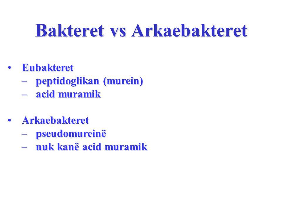 Bakteret vs Arkaebakteret EubakteretEubakteret –peptidoglikan (murein) –acid muramik ArkaebakteretArkaebakteret –pseudomureinë –nuk kanë acid muramik