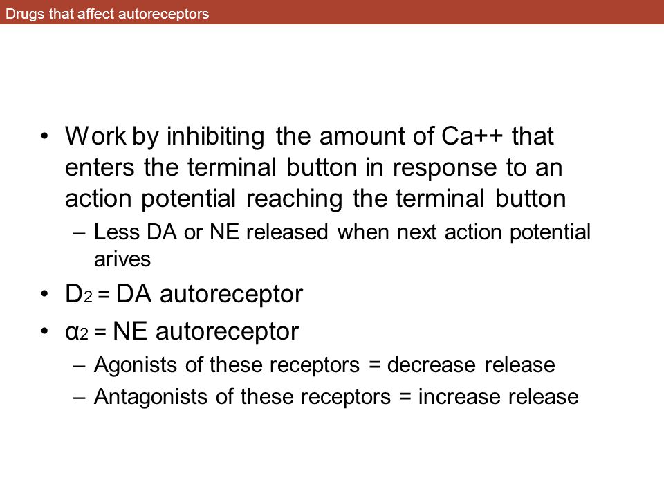 Drugs that affect autoreceptors Work by inhibiting the amount of Ca++ that enters the terminal button in response to an action potential reaching the