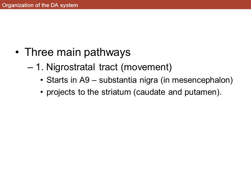 Organization of the DA system Three main pathways –1. Nigrostratal tract (movement) Starts in A9 – substantia nigra (in mesencephalon) projects to the