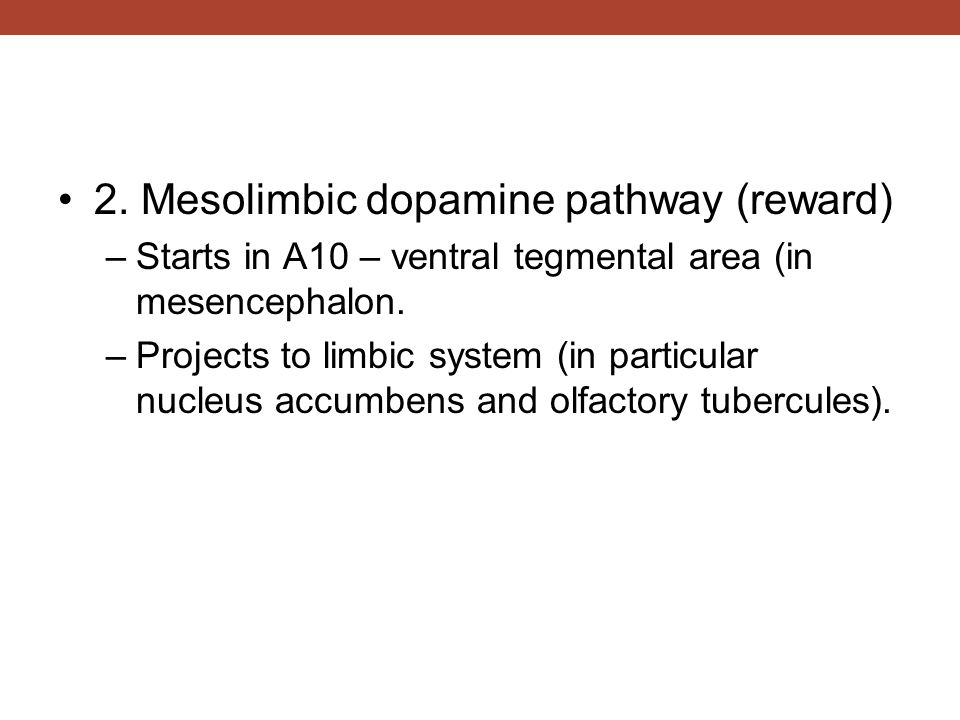 2. Mesolimbic dopamine pathway (reward) –Starts in A10 – ventral tegmental area (in mesencephalon. –Projects to limbic system (in particular nucleus a
