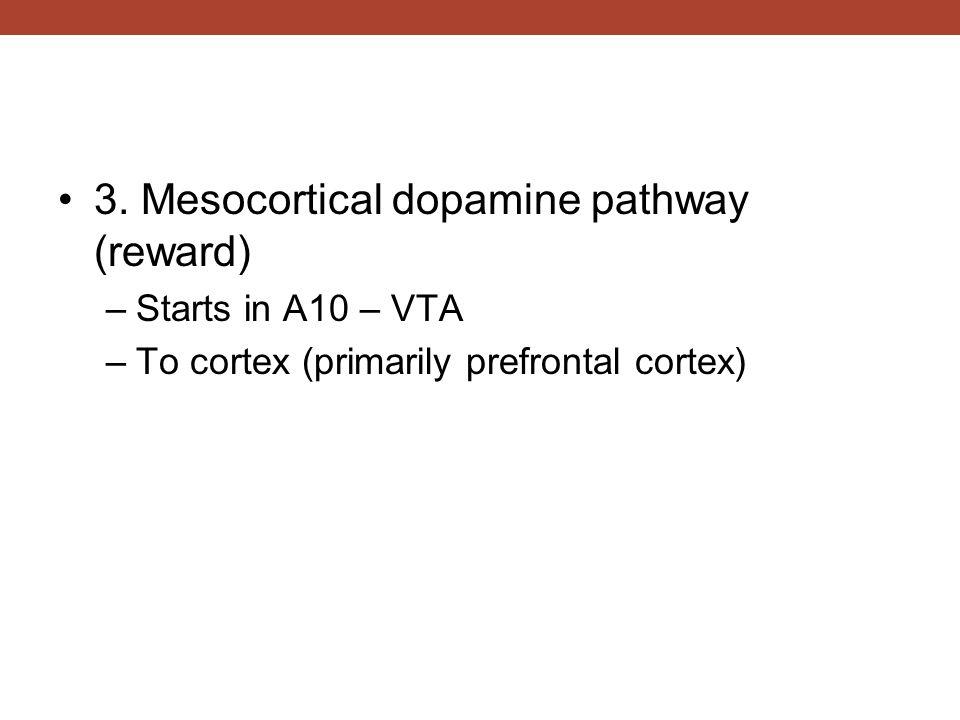 3. Mesocortical dopamine pathway (reward) –Starts in A10 – VTA –To cortex (primarily prefrontal cortex)