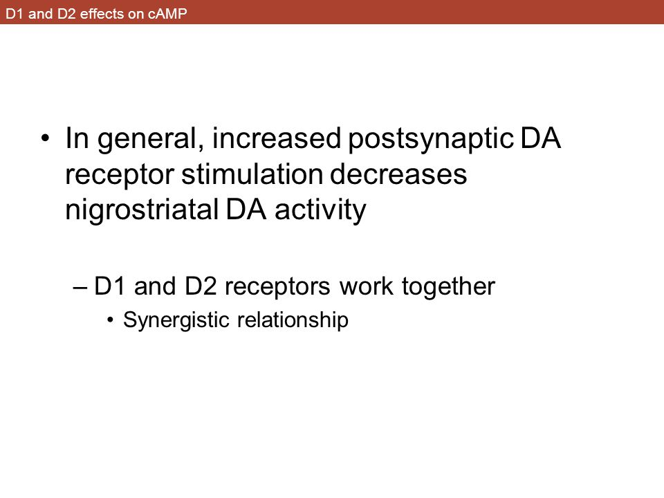 D1 and D2 effects on cAMP In general, increased postsynaptic DA receptor stimulation decreases nigrostriatal DA activity –D1 and D2 receptors work together Synergistic relationship