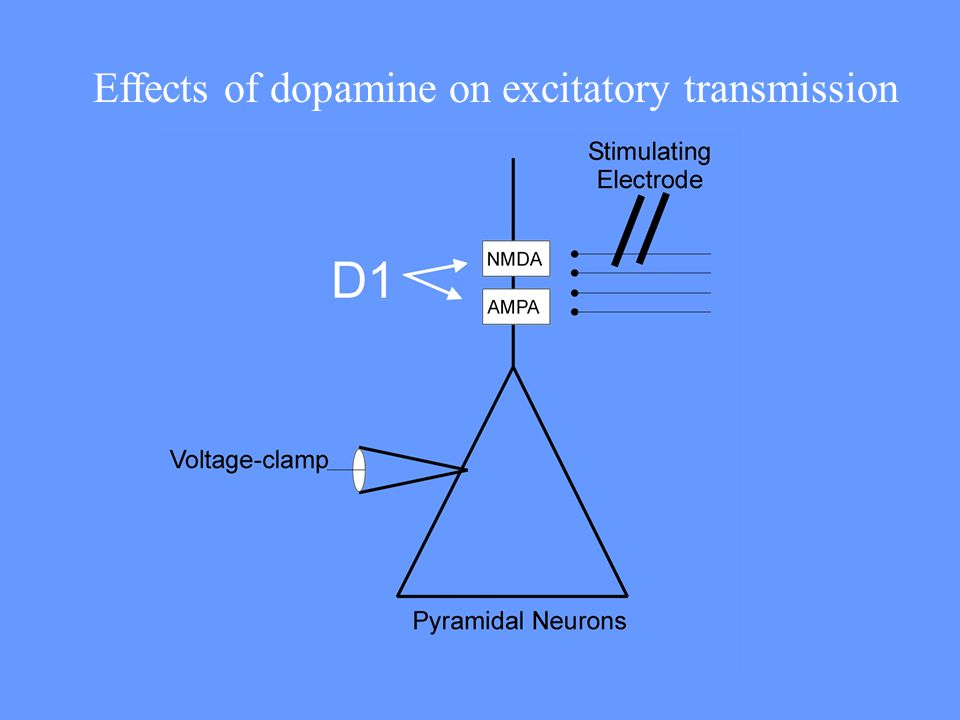 Effects of dopamine on excitatory transmission