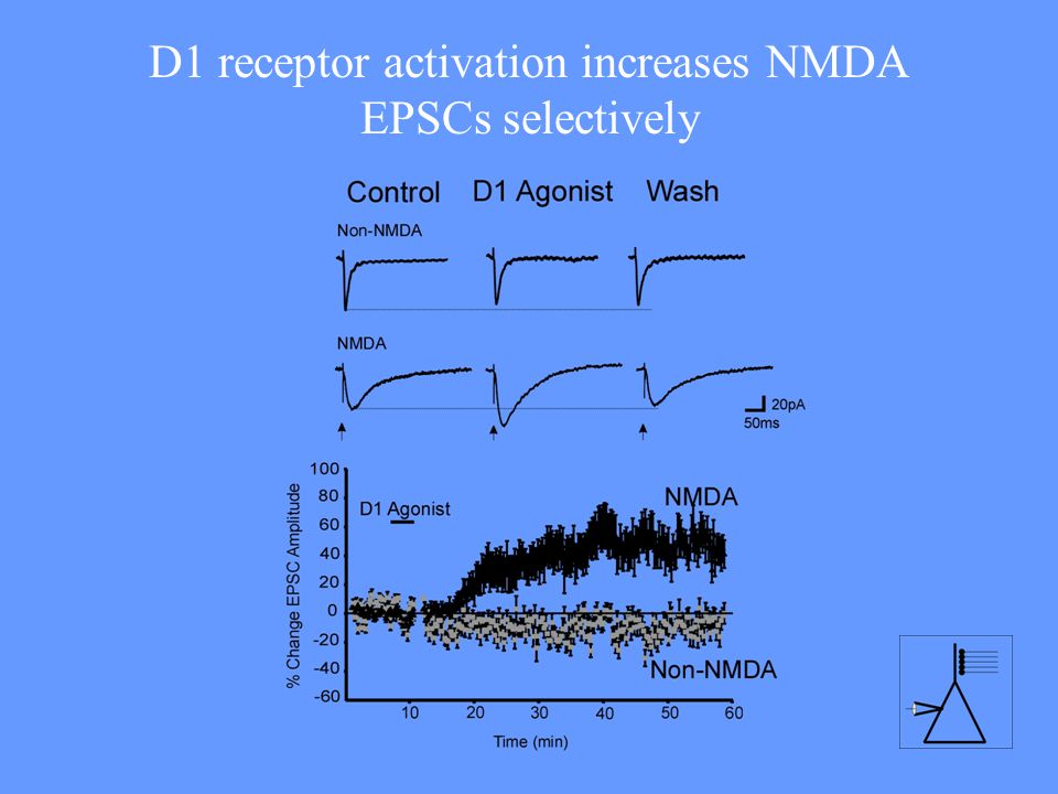 D1 receptor activation increases NMDA EPSCs selectively