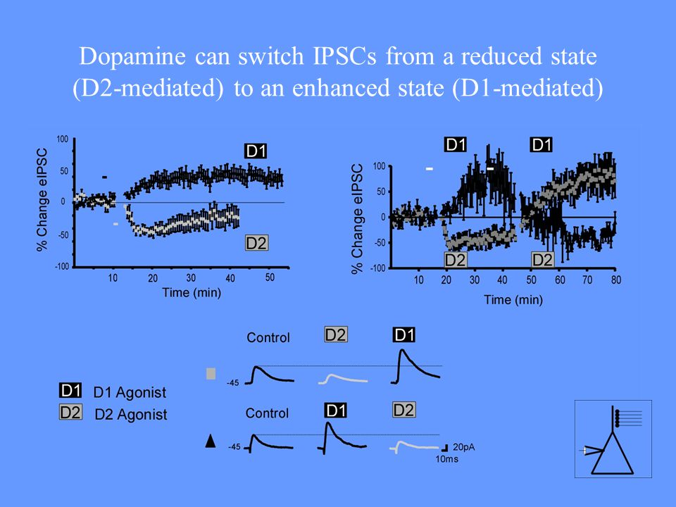 Dopamine can switch IPSCs from a reduced state (D2-mediated) to an enhanced state (D1-mediated)
