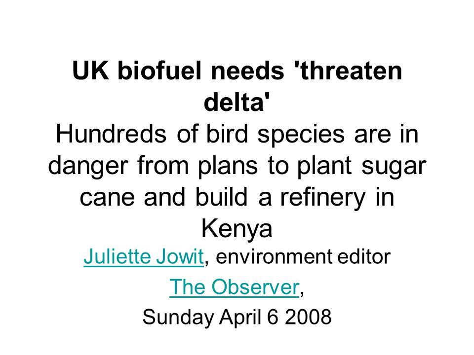 UK biofuel needs threaten delta Hundreds of bird species are in danger from plans to plant sugar cane and build a refinery in Kenya Juliette JowitJuliette Jowit, environment editor The ObserverThe Observer, Sunday April 6 2008