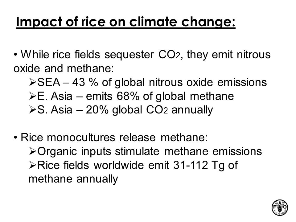 Impact of rice on climate change: While rice fields sequester CO 2, they emit nitrous oxide and methane:  SEA – 43 % of global nitrous oxide emission