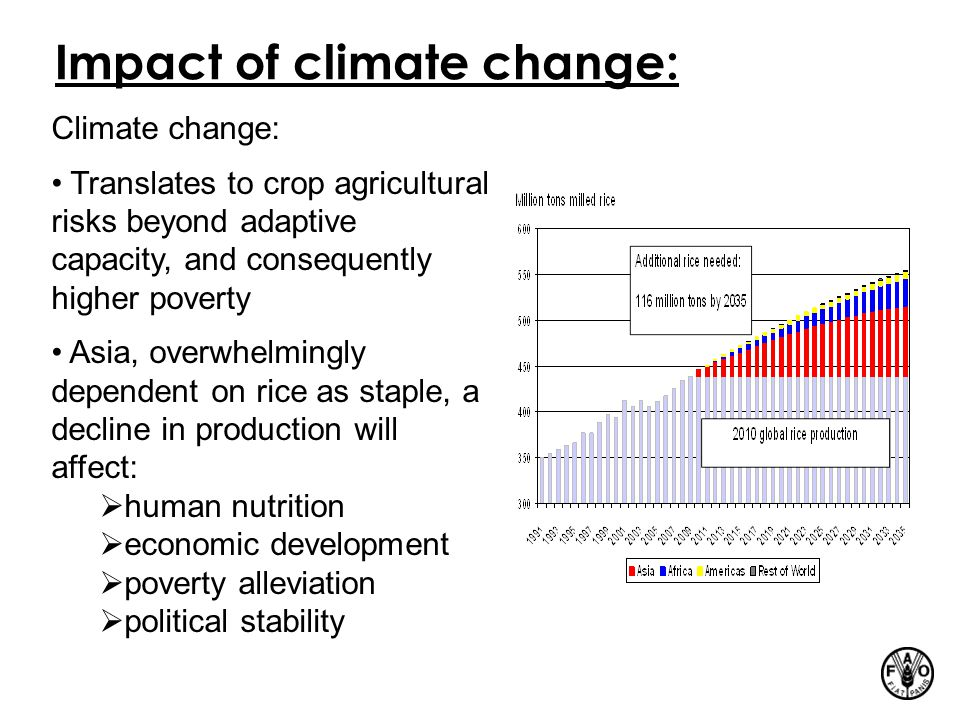 Impact of climate change: Climate change: Translates to crop agricultural risks beyond adaptive capacity, and consequently higher poverty Asia, overwhelmingly dependent on rice as staple, a decline in production will affect:  human nutrition  economic development  poverty alleviation  political stability