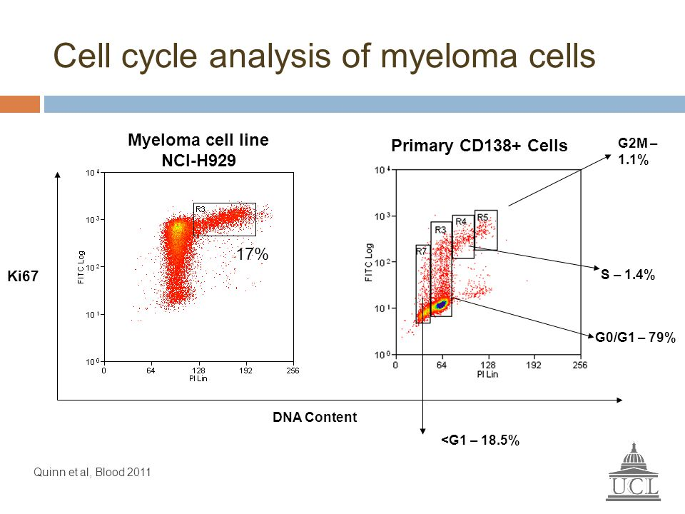Ki67 DNA Content 17% Myeloma cell line NCI-H929 Primary CD138+ Cells G2M – 1.1% S – 1.4% G0/G1 – 79% <G1 – 18.5% Cell cycle analysis of myeloma cells