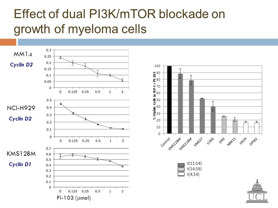 MM1.s NCI-H929 KMS12BM Effect of dual PI3K/mTOR blockade on growth of myeloma cells t(11;14) t(14;16) t(4;14) PI-103 (  mol) Cyclin D2 Cyclin D1