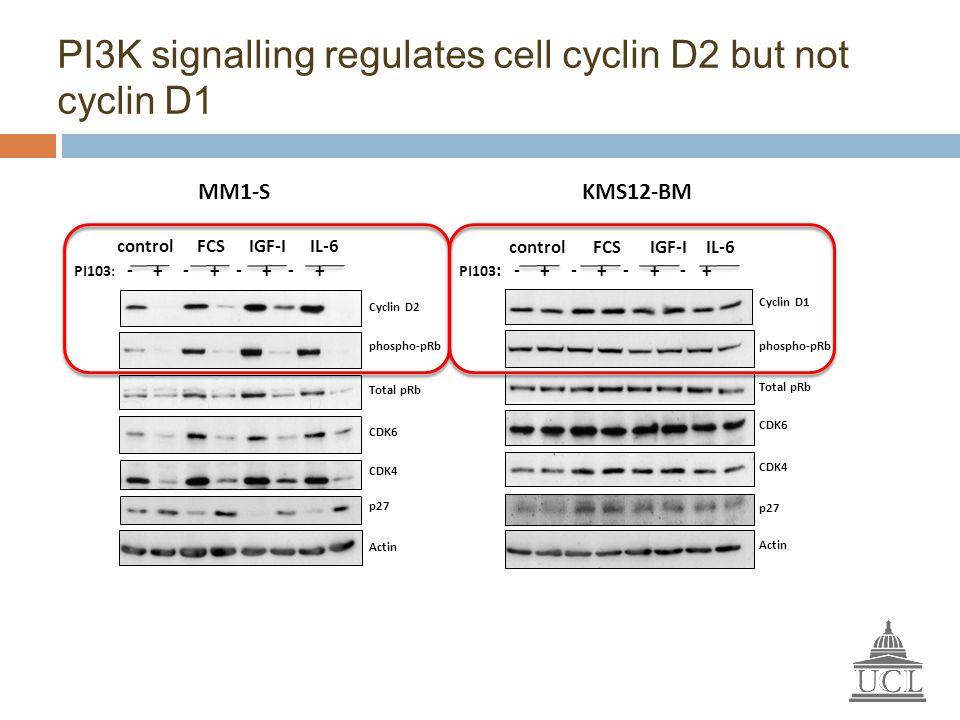 PI3K signalling regulates cell cyclin D2 but not cyclin D1 MM1-S PI103 : - + - + - + - + control FCS IGF-I IL-6 KMS12-BM Cyclin D1 phospho-pRb CDK6 p2