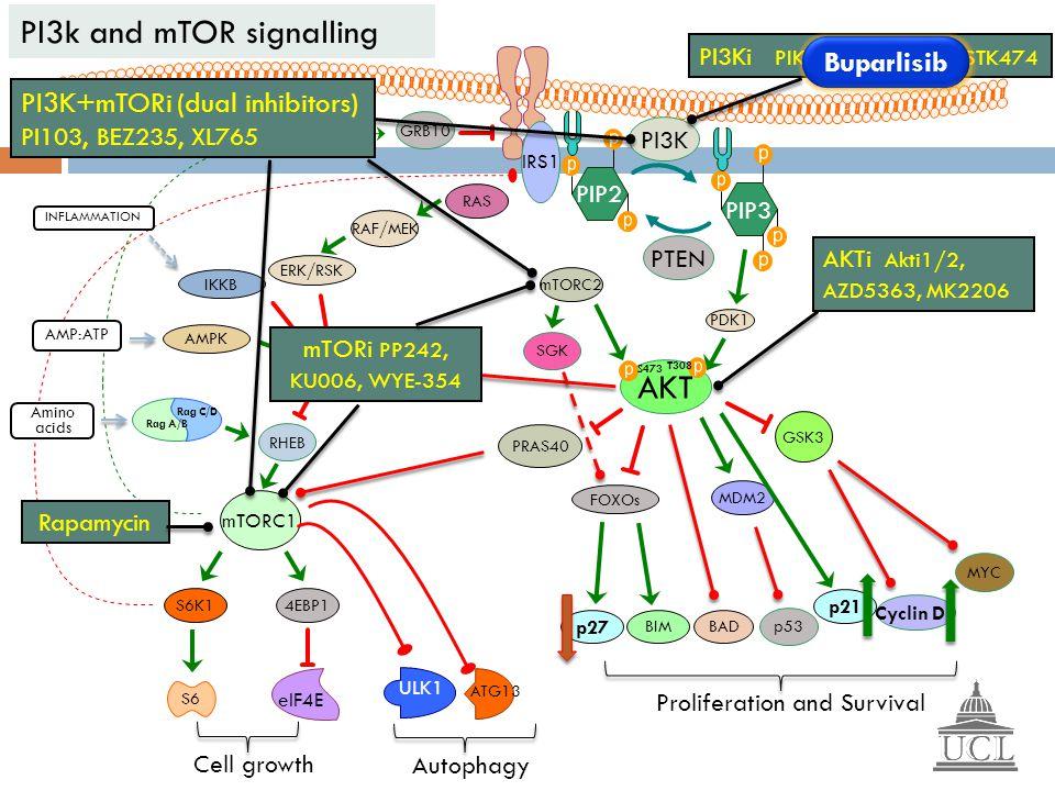 PIP2 PIP3 PI3K PTEN AKT PDK1 mTORC2 T308 S473 mTORC1 4EBP1 eIF4E S6K1 S6 Cell growth IRS1 GRB10 TSC1/2 RHEB ERK/RSK IKKB AMPK Rag A/B Rag C/D Amino ac