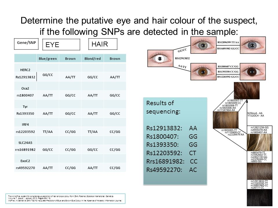 Determine the putative eye and hair colour of the suspect, if the following SNPs are detected in the sample: Blue/greenBrownBlond/redBrown HERC2 Rs129