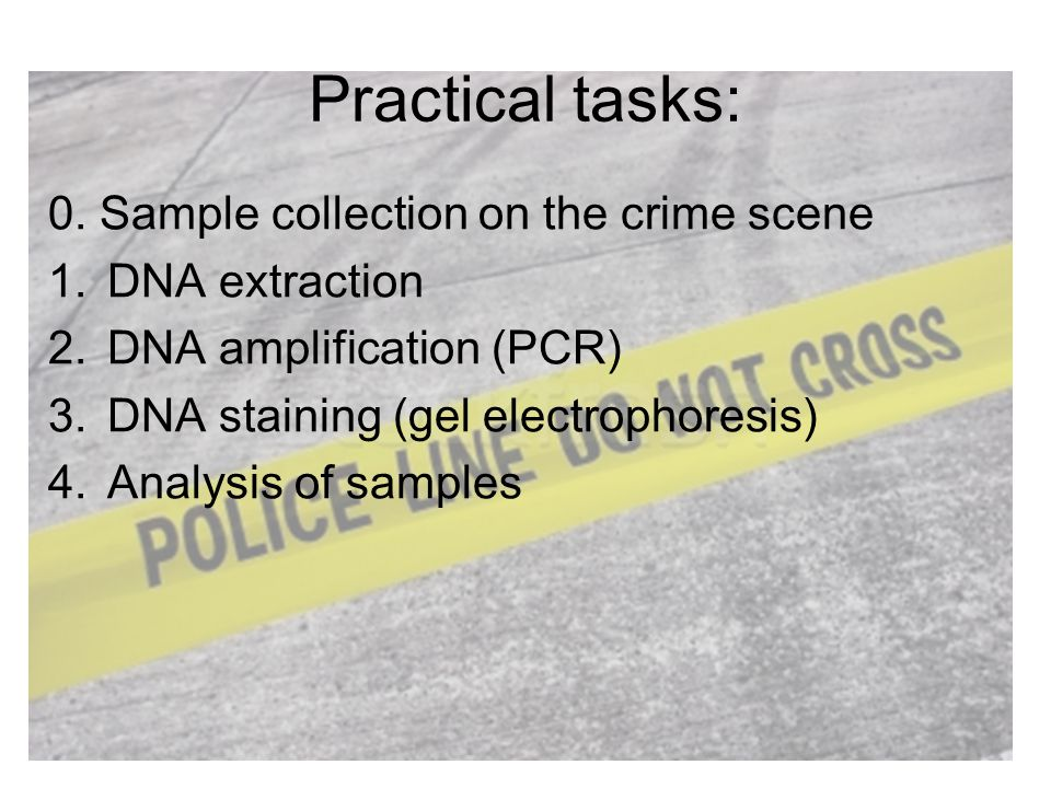 Practical tasks: 0. Sample collection on the crime scene 1.DNA extraction 2.DNA amplification (PCR) 3.DNA staining (gel electrophoresis) 4.Analysis of